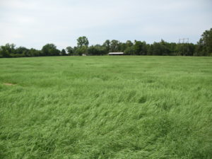 Improvement of Bermudagrass Hay Meadow with Weed Control, Fertilizer Application and Replanting.